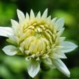 Bei einer Bepflanzung sollte man auf die Abstände zueinander achten, denn die Gartenpflanzen sollen ja wachsen und gedeihen.