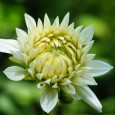 Mit diesen Gartenpflanzen hat man das gesamte Jahr Freude Für Blütenfreude über das ganze Jahr, ist es wichtig rechtzeitig mit dem Aussäen der Pflanzen anzufangen. Unterschiedliche Pflanzen müssen zu unterschiedlichen […]