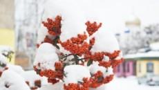 Sie wollen Schnee und Eis gelassen entgegen sehen? Dann sollten Sie Ihren Garten winterfest machen. Bevor die Temperaturen in den Minusbereich fallen, sollten einige Dinge erledigt sein. Die Pflanzen rund […]