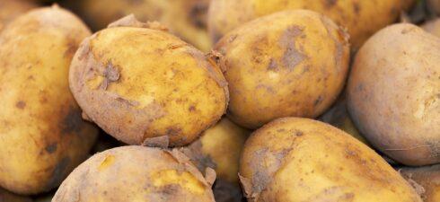 Die Landwirtschaft ist das Fundament der Gesellschaft, denn ohne sie gäbe es kaum Ernährungsmöglichkeiten. Die großen Felder voller Kartoffeln, Kohl oder anderer Gemüsesorten sind ein Segen doch die Arbeit dahinter […]